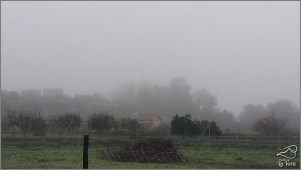 madrigal-de-la-vera-bajo-la-niebla-frog-in-spain114