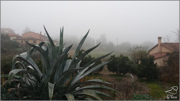 madrigal-de-la-vera-bajo-la-niebla-frog-in-spain117